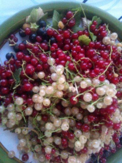 1berry