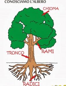 Conosciamo l'albero colore